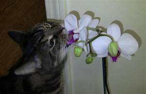 Are, Orchids, Poisonous, To, Animals