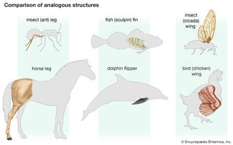 homology evolution britannicacom