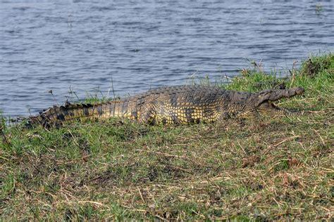 wasserbett nicht zu empfehlen baden nicht zu empfehlen foto bild natur afrika tiere bilder auf fotocommunity