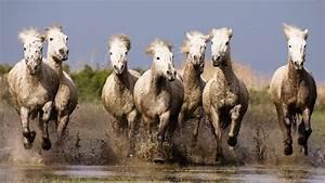 Tapety na pulpit: konie, koń, tapety z konikami, konie w ...