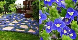 Bodendecker Blau Blühend Winterhart : bodendecker f r fantastische gartengestaltung freshouse ~ Michelbontemps.com Haus und Dekorationen