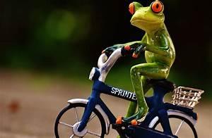 Frosch Bilder Lustig : frosch fahrrad bergauf kostenloses foto auf pixabay ~ Whattoseeinmadrid.com Haus und Dekorationen