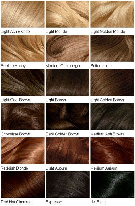 Best 25+ Brown Hair Colour Chart Ideas On Pinterest