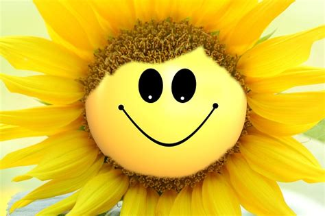 free illustration sun flower flower smily smile free