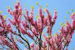 Bäume Für Kleine Gärten : topliste die sch nsten b ume f r kleine g rten ~ Whattoseeinmadrid.com Haus und Dekorationen