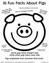 Pigs Passages Cjophoto 6th Kuklite Arthouse sketch template