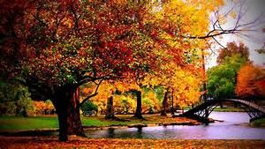 Fall Autumn Park Desktop Wallpaper - HD Wallpapers