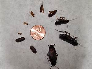 waterbug control budget pest control pittsburgh pa With water bugs in bathroom