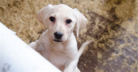 breaking  bills aim   dogs  americas puppy