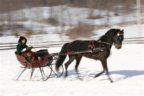 horse drawn sleigh ride shutterbug
