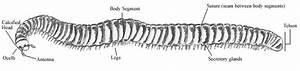 Millipedes Of Petroglyph