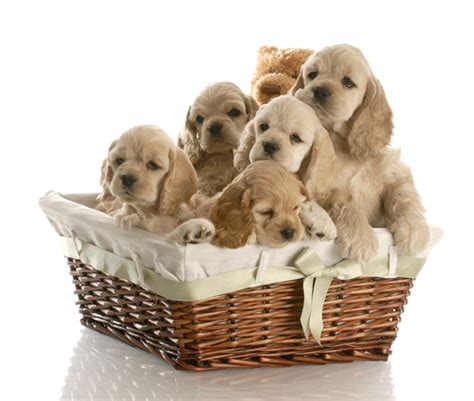 great   wicker baskets