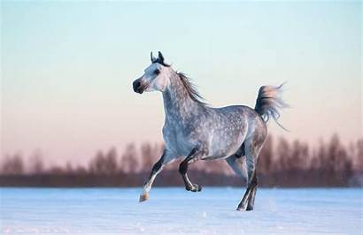 Horse Wallpapers Aesthetic