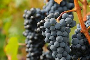 Grapes Full HD Wallpaper and Background Image | 2048x1360 ...