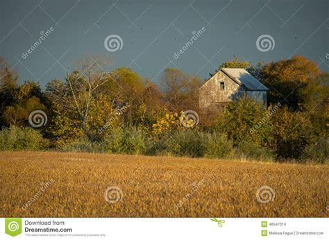 abandoned barn in the trees stock 46547014