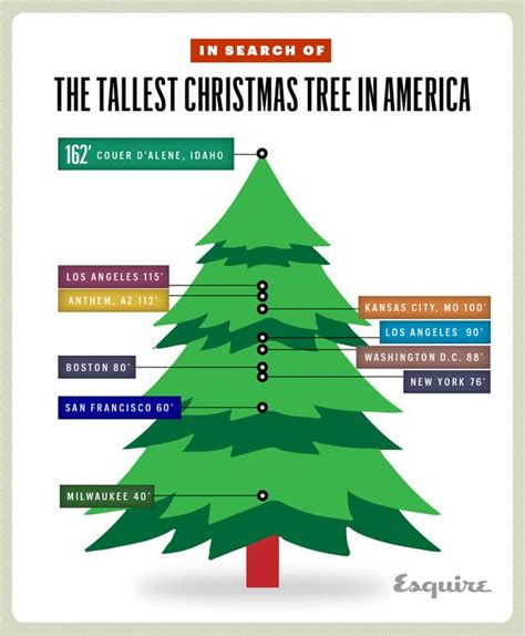 in search of the tallest christmas tree in america