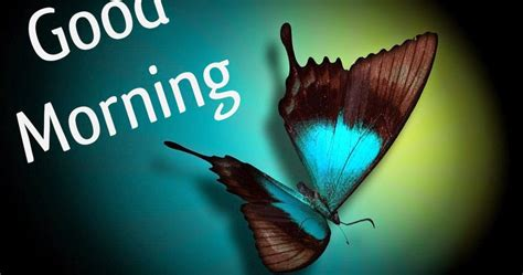 butterfly good morning  images  festival chaska