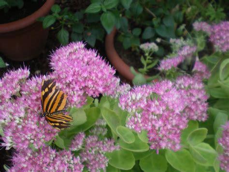 Jardins Des Papillons Hunawihr Avis by Jardin Des Papillons Parc Animalier Hunawihr 68150