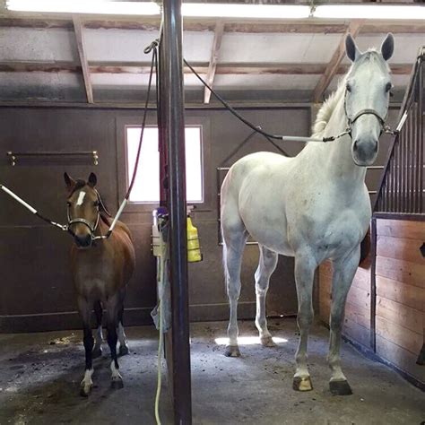 big differences  horses  ponies