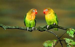 Most Beautiful Parrots 1080p Wallpapers – Birds HD ...