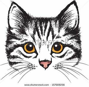 7 best images about Cat faces on Pinterest   Free vector ...