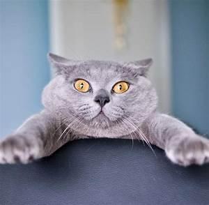 Katze Kotzt Viel : katzen erinnern sich an viel mehr als wir denken welt ~ Frokenaadalensverden.com Haus und Dekorationen