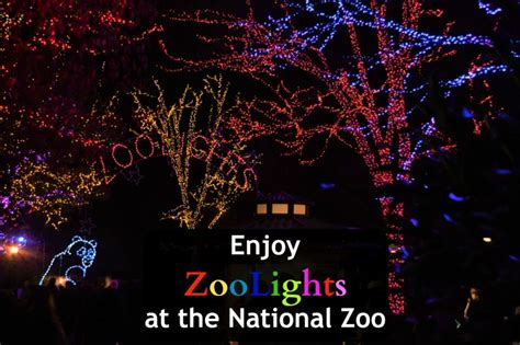 zoolights at the national zoo in washington dc