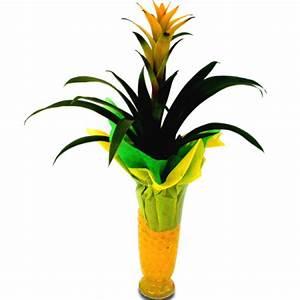 Plante Fleurie Intérieur : livraison fleurs plante fleurie guzmania floraclic ~ Premium-room.com Idées de Décoration