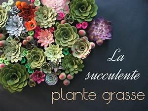 Succulentes Pas Cher : achat plante grasse ~ Melissatoandfro.com Idées de Décoration