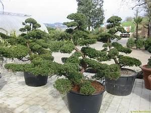 Japanische Pflanzen Winterhart : schweizer versand baumschule ~ Michelbontemps.com Haus und Dekorationen