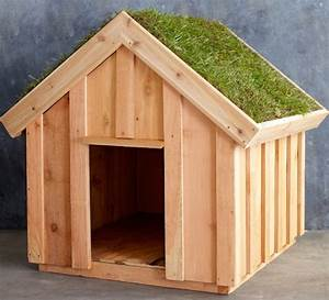 when being in the dog house isn39t so bad incredible things With green dog house