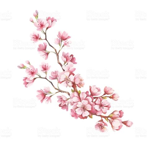 Cherry Blossom Pencil Drawing Best Images Collections Hd