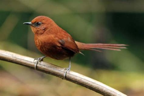 best 28 rufous color rufous a81c07 hex color code