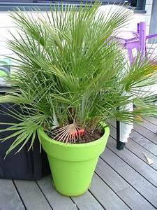 Plante D Extérieur En Pot : plante pour gros pot exterieur pivoine etc ~ Teatrodelosmanantiales.com Idées de Décoration