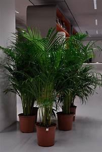 Ikea Plantes Artificielles : infra jungle goiffon beaut ~ Teatrodelosmanantiales.com Idées de Décoration