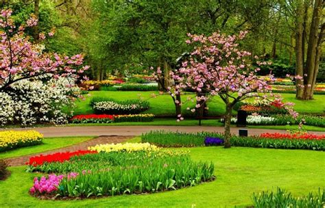Rainbow garden merupakan taman bunga yang tak boleh dilewati bagi pecinta bunga. Intip Pesona Bunga Sakura di Taman Bunga Cibodas - Jenis.net