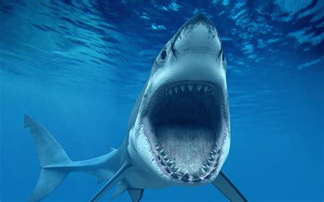 Shark Image Awesome Shark Wallpaper In Really High Quality