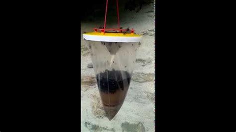 produit contre les moucherons cuisine anti moucherons maison radiquer les moucherons avec du