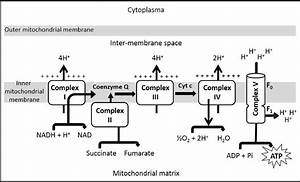Summary Of Oxidative Phosphorylation