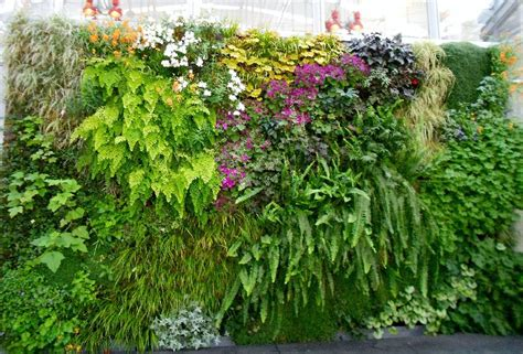 How To Plant Vertical Garden by Best Plants For Vertical Garden Vertical Garden Plants