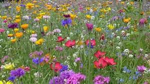 Wiese Mit Blumen : blumenwiese anlegen tipps f r ein sch nes bl tenmeer sat 1 ~ Watch28wear.com Haus und Dekorationen