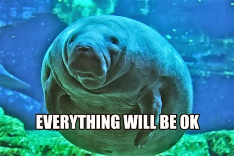 Manatee Meme - moving mountains manatee project