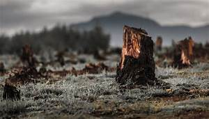 Deforestation Effects On Ecosystems