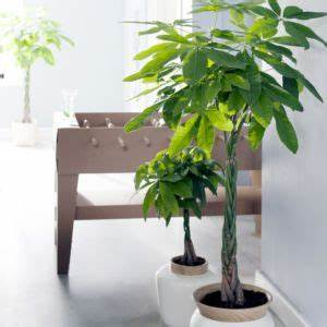 Plante Pour Appartement