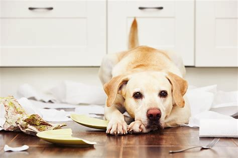 home   tips  keeping  dog happy