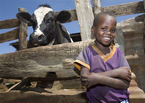 heifer international project development gift west dan fish holistic approach takes charities three favorite icross july