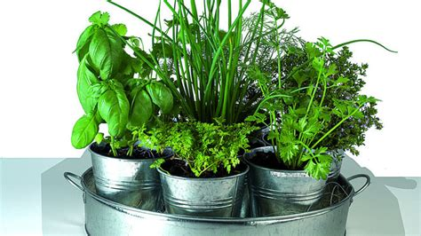 plante aromatique cuisine comment cultiver des plantes aromatiques dans intérieur