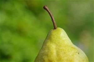 Wann Müssen Apfelbäume Geschnitten Werden : wann apfel birne kirsche co geschnitten werden ~ Lizthompson.info Haus und Dekorationen