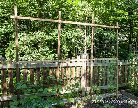 Weekend Gardening Building A Trellis For Beans And Peas