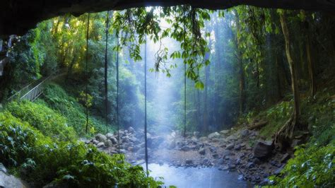 rain forest wallpapers wallpaper cave